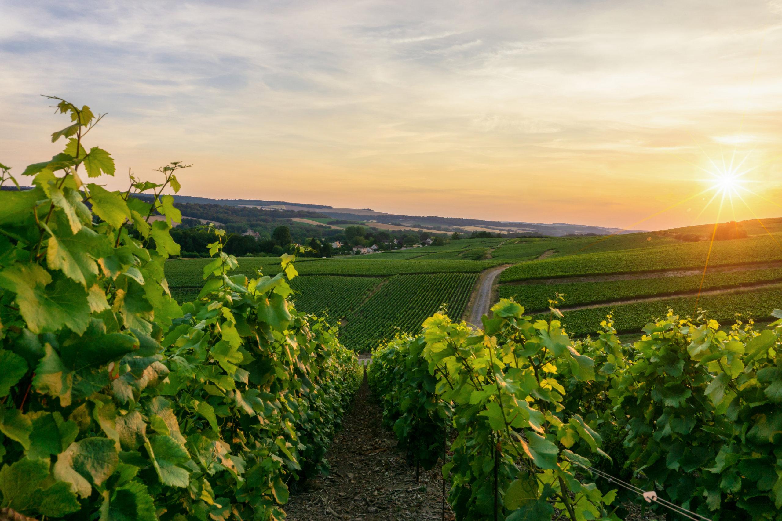 Dégustation dans les vignes : <br>lecture de paysage, <br>vendredi 6 août